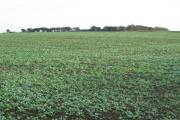 Atwick - Farmland