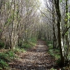 Chestnut coppice, Abbey Wood