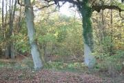 Morgaston Wood