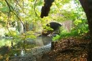 River Crane at Cranford