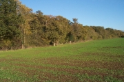 Middleyard Coppice