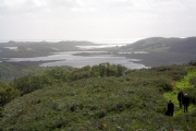 Looking south over Loch Sween from Taynish
