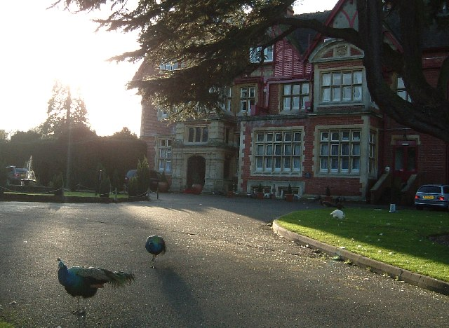 Pendley Manor Hotel, Tring - with Peacocks
