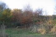 Woods, Pitlowie.