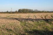 Farmland South of Driffield