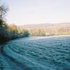 Frosty hillside, Remenham