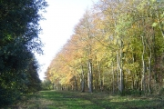 Furneux Pelham: Merlin Wood
