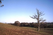 Farmland near Bidbeare Farm