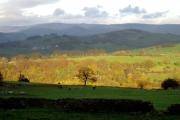 Autumn leaves at Park Wood, Goyt Valley, Derbyshire