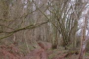 Woodland near Cothelstone Hill