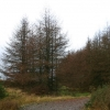 Forest track on Clach Mackenny