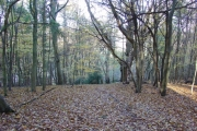 Deciduous Woodland in Reigate Abbey Park, Surrey