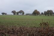 Fields, Selston