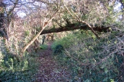 Woodland path, Maxey, Peterborough