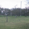Orchard, Berrington Green.