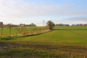 Farmland, Dry Drayton, Cambs