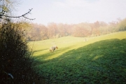 Highruse Wood and paddocks below High Rews Farm