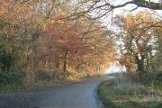 Buckland Wood by Leyland's Farm