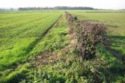 Farmland North of Bracken