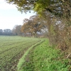Letchmore Heath: The footpath to Patchetts  Green