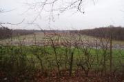 Fields in Garson Farm