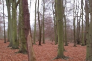 Winterdown wood