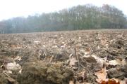 Coldash Wood