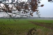 Farm track near Clothall