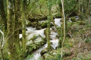 Lanlivery: river below the Treffry Viaduct