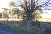 The Edge of Tutehill Wood.