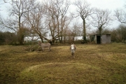 Donkeys at West Town, Baltonsborough