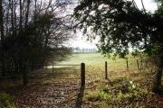Farmland next to Great Wood