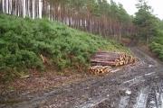 A wood near Creich