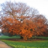 Autumn on the Millennium Way
