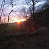 Looking out of Bloom Wood at sunset