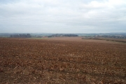 Farmland south of Cuckney