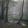 Evening, Holme Wood