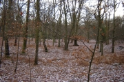 Woodland near Charleshill