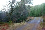 Bridge, Forest track