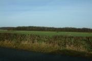 Long Plantation