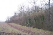 Edge of Ashperton Park Woods