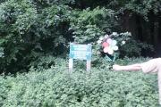 Swinton Estate Woods