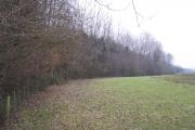 Edge of Childer Wood