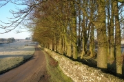 Stand of trees, High Lane, Newbiggin-on-Lune