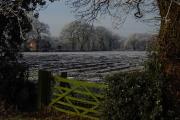 Farmland at the eastern end of Common Farm Lane, Chelford