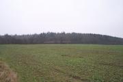 Hansnett Wood