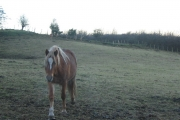 Horses near Milwr Road