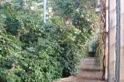 Camellia House, Bretton Hall