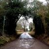 Lane to Hill Green Farm off Hemp Lane, Wigginton
