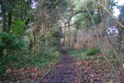 Woodland in Evington